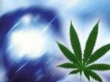 Blaulicht / Marihuana