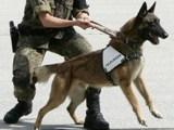 Androhung des Einsatzes eines Diensthundes